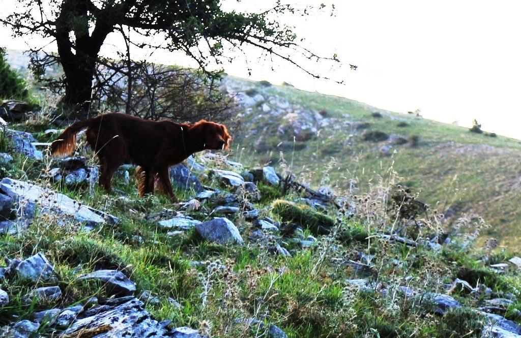 Η Έλλα σε φέρμα | Ιρλανδικά σέττερ στην Ελλάδα